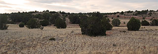 Northern Arizona Acreage