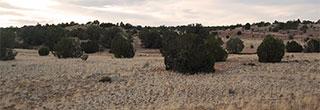 Northern Arizona Acreage