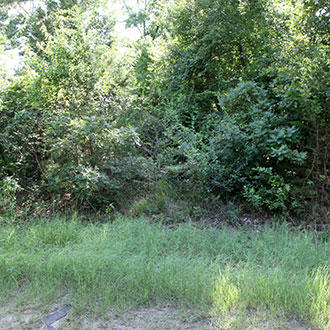 Enjoy a Wooded Property with Power and Water Available - Image 1