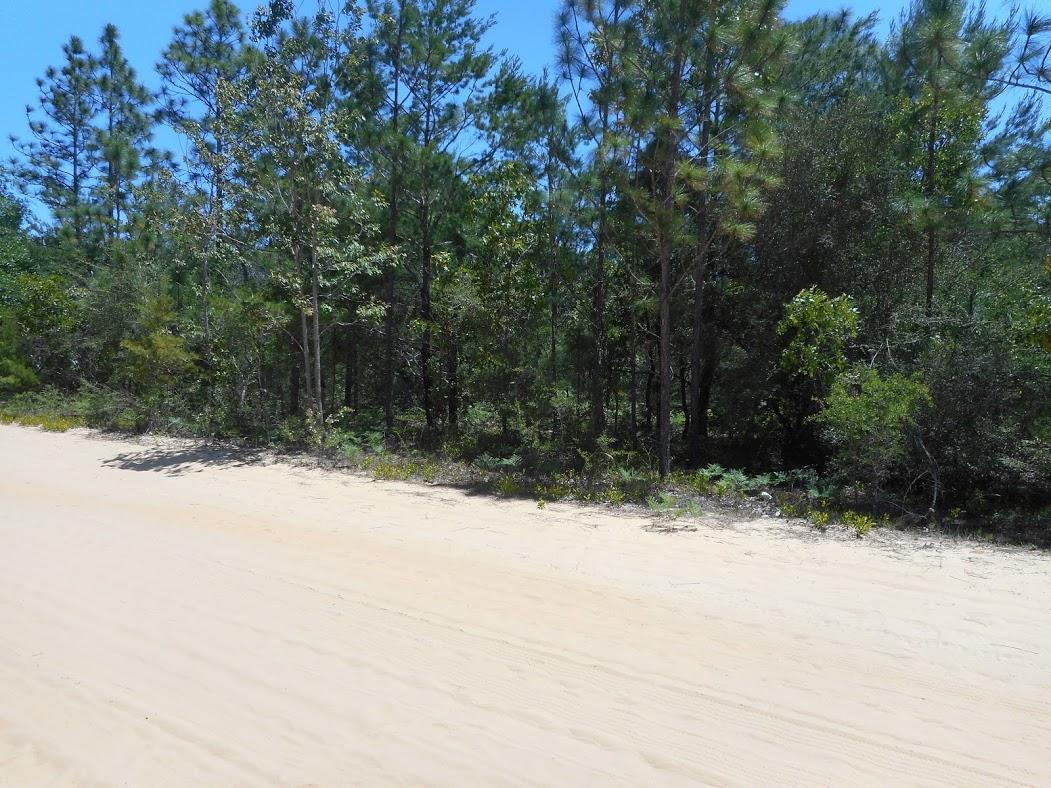 Florida Investment Property in Developing Area - Image 3