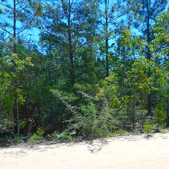Florida Investment Property in Developing Area - Image 0