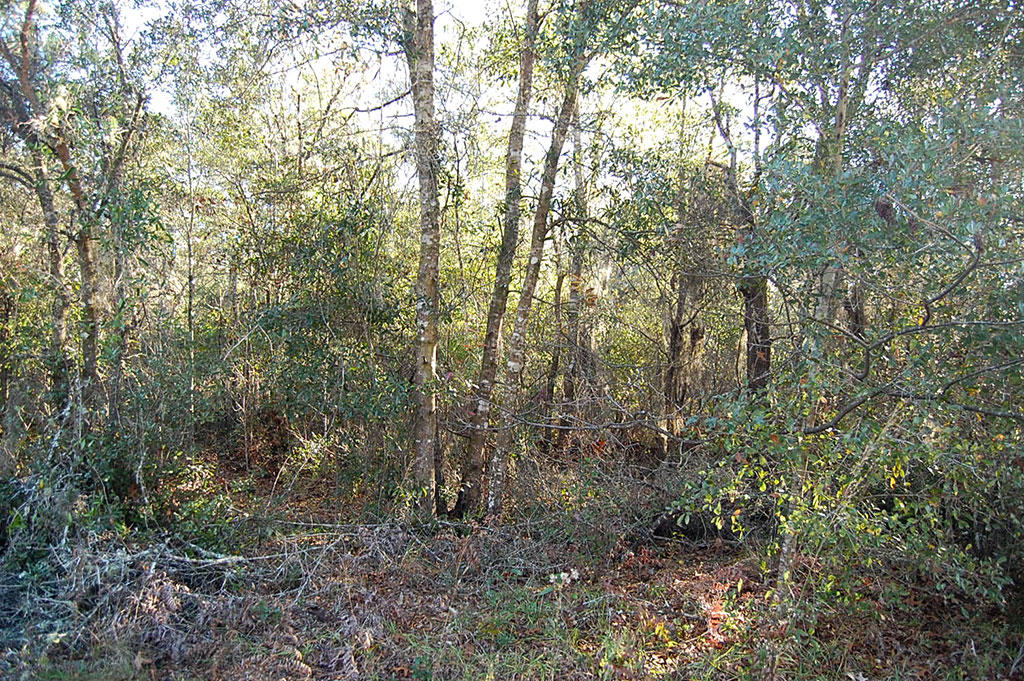 Almost One Half Acre Residential Property in Interlachen - Image 4