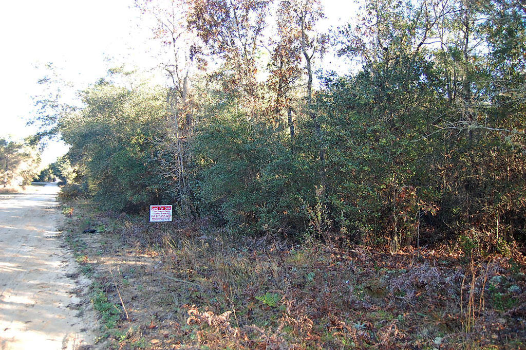 Almost One Half Acre Residential Property in Interlachen - Image 5