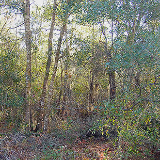 Almost One Half Acre Residential Property in Interlachen - Image 0