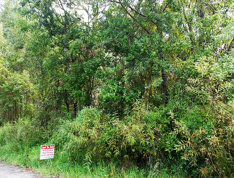 Rural Florida Gem 10 Miles from Gulf Coast - Image 5
