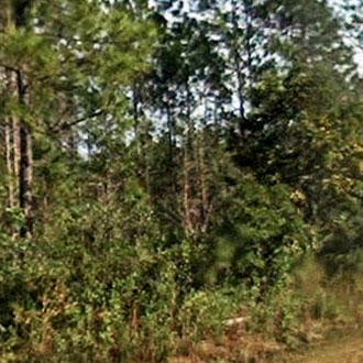Rural North Eastern Florida Acreage - Image 0