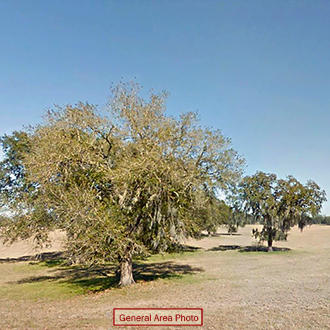 Three Combined Lots With Trees and Paved Road Access - Image 0