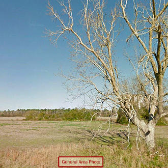 Tree Covered Acreage within 15 Miles of the Beach - Image 0