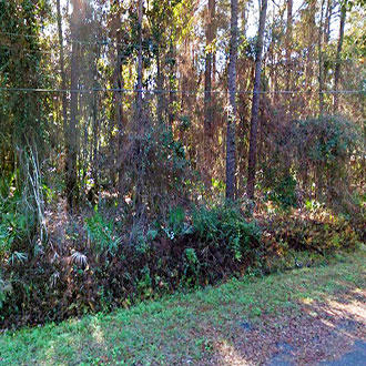 Treed Residential Parcel on Quiet Dead End Road - Image 0