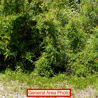 Central Florida Acreage an Hour from Gainesville - Image 0