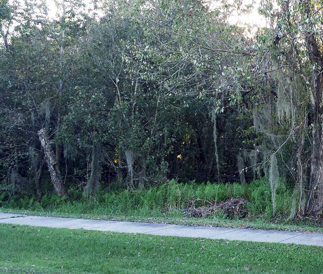 Dazzling Homesite Outside of Tampa - Image 5