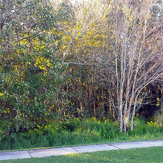 Dazzling Homesite Outside of Tampa - Image 1