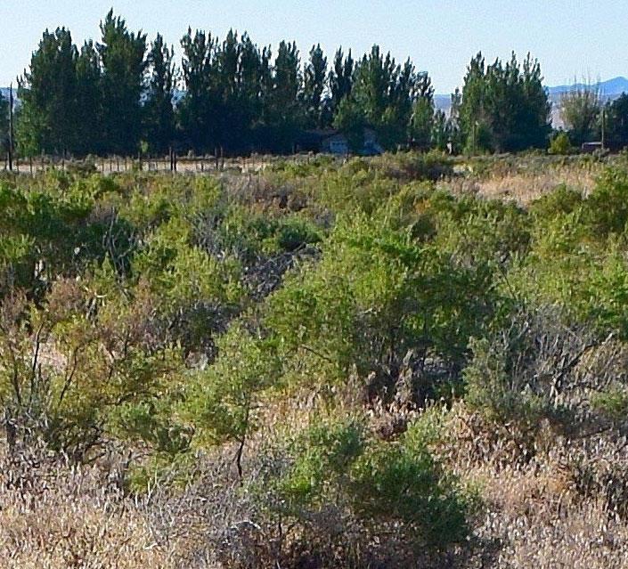 6+ Acre Nevada Getaway Close to I-80 - Image 5