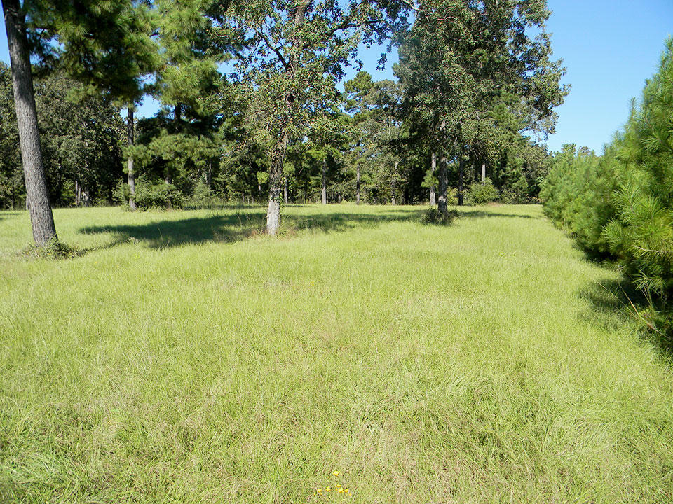 Enjoy the Peace and Quiet from Your Trinity Plantation Acreage - Image 3