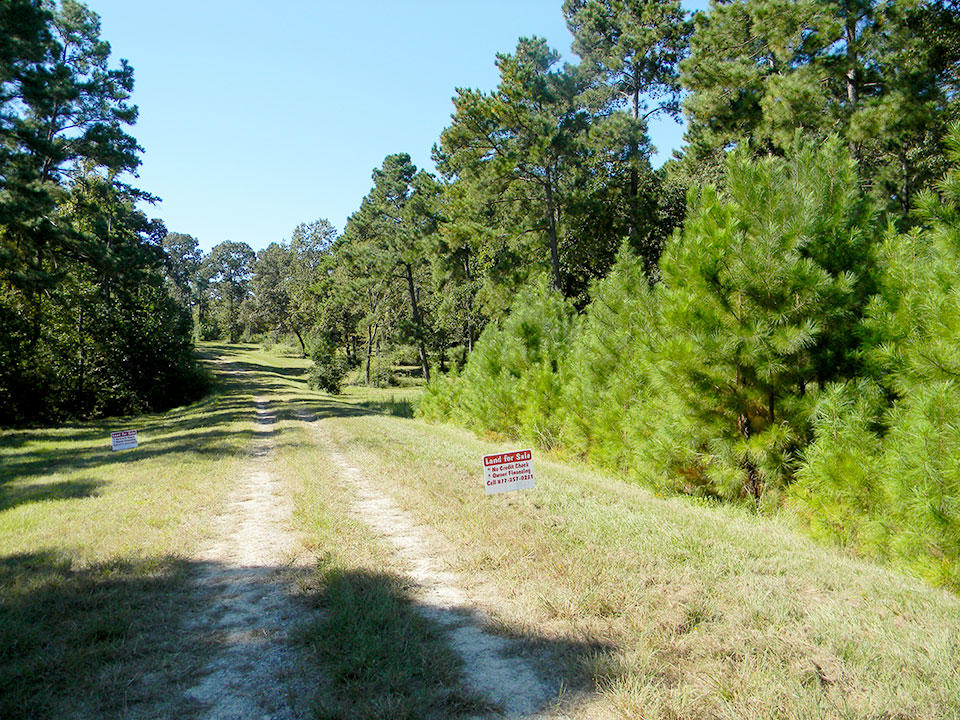 Find this Rural Gem Only 90 Minutes from Houston - Image 4