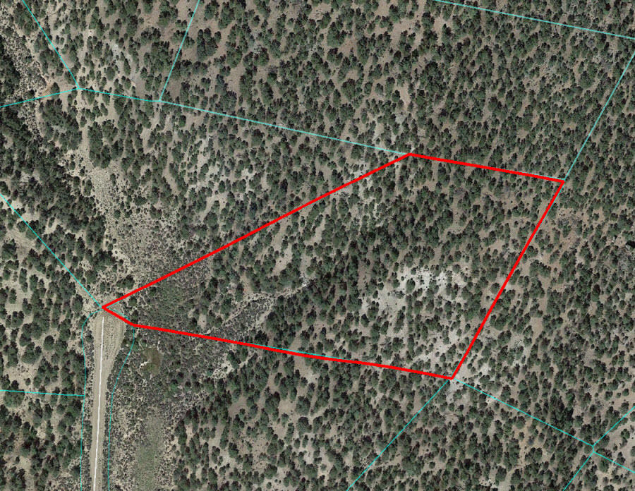 Five Secluded Colorado Acres - Image 1