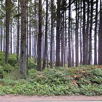 Hide Away on this Washington Coastal Property - Image 1