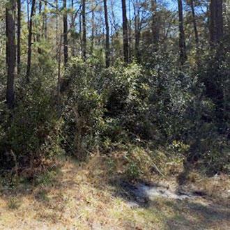 Quarter Acre Hideout in Beautiful North Carolina Community - Image 1