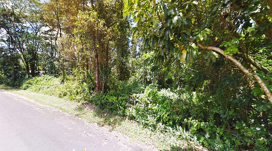 Lush Land Opportunity Near Beautiful Pahoa - Image 5