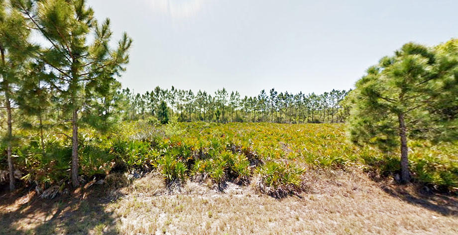 Quarter Acre Parcel Just Minutes From Harbor - Image 2