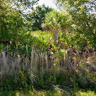 Lush Land Opportunity in Family Friendly Community - Image 0