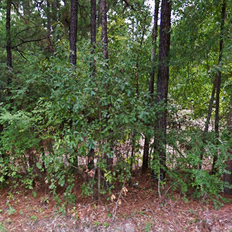Charming Quarter Acre Lot in Rural Texas - Image 0