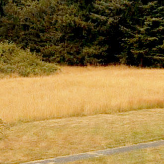 Nearly Half Acre on Famed Whidbey Island - Image 0