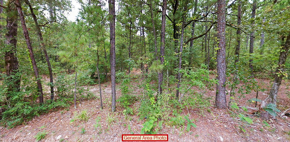 Large Lot in Rural Texas Provides Perfect Serenity - Image 2