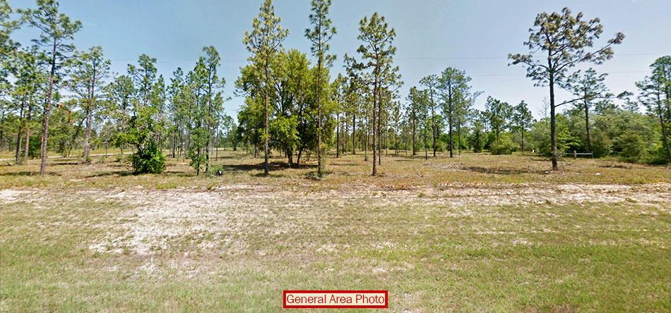 Beautiful 1 Acre Plot in Sunny Florida - Image 3
