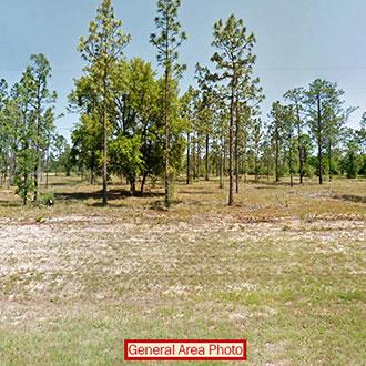 Beautiful 1 Acre Plot in Sunny Florida - Image 1