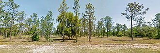 Beautiful 1 Acre Plot in Sunny Florida
