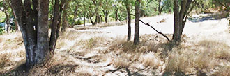 Unbelievable Opportunity With Land Able to Be Split into 4 Lots