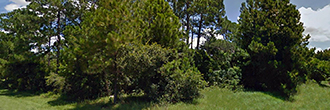 Superb Lot in Deltona Lakes Subdivision