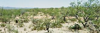 Prime Real Estate on 1 Acre Desert Land