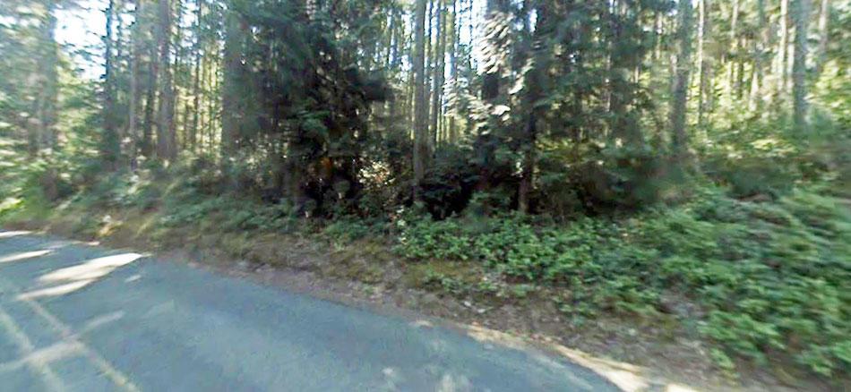 Nature Lovers Paradise on Anderson Island Washington - Image 4