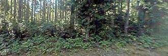 Nature Lovers Paradise on Anderson Island Washington
