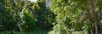 Treed Lot in Quiet Tallahassee Neighborhood