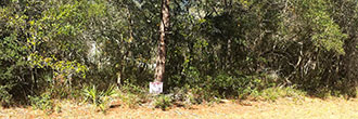 Treed Lot in Marion Oaks Subdivision of Ocala Florida