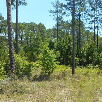 Crestview Property Within a Growing Community! - Image 0