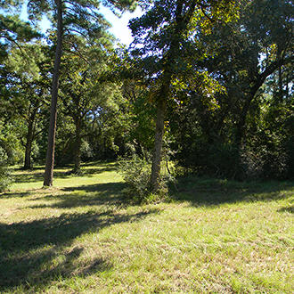 Find this Tree Covered Acreage 90 Minutes North of Houston - Image 1