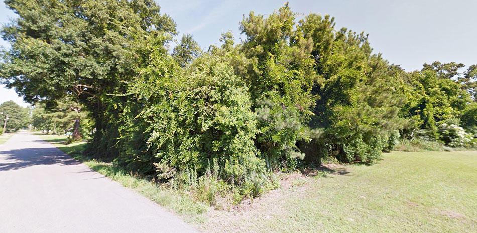 Gorgeous Land Near Louisiana Border - Image 3