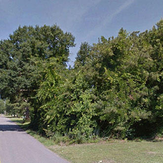 Gorgeous Land Near Louisiana Border - Image 1