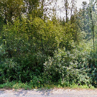 Remarkable Evergreen State Property - Image 1