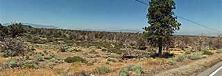 Majestic Acreage in Northern California, with view of Mt. Shasta