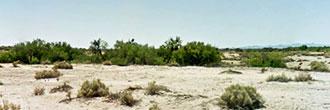 Peaceful Desert Oasis on 60 Acre Parcel