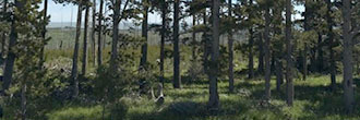 Montana acreage next to Glacier National Park