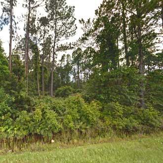 Half-Acre Homesite Near the St. Johns River - Image 1