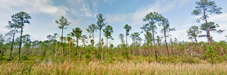 Preserve Nature on 2 Acres of Florida Paradise