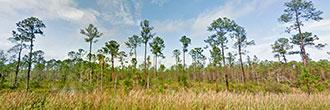 Dream Property on 2 Acres of Florida Paradise