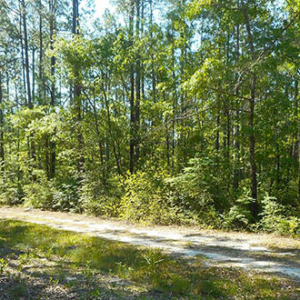 Over a Quarter of an Acre Lot in Fountain Florida - Image 0